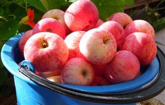 Яблочки наливные румяные, ароматные