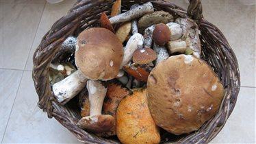 Урожай грибов!!!