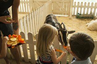 1 сентября для всех школьников вход в зоопарк «Бебека» бесплатный!