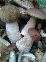 Красавцы грибочки.