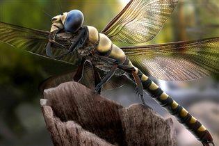 Гигантских насекомых покажут в Московском зоопарке