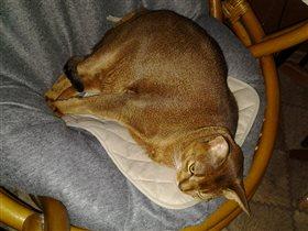 Вегас, мой любимый кот!
