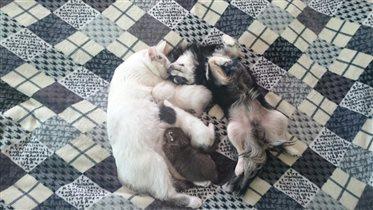 И жили они как кошка с собакой)))