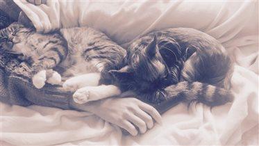 Кто-то кошек любит или собак, а я всех люблю без р