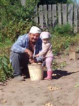 Собираем  картошку!!!