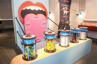 Интерактивный проект для детей и их родителей - выставка «Биоэкспериментаниум»