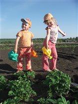 Мы клубнику поливая, ждём большого урожая!!!