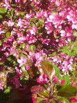 Яблони в цвету - весны рожденье.