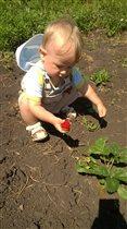 Первая ягодка для малыша)))