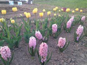 Мои прекрасные цветочки