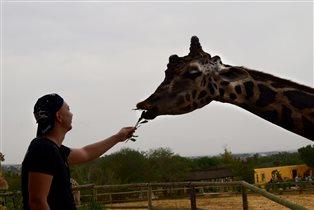 На озере Чад Изысканный бродит жираф.
