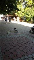 Собака сдает жилье