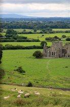 Ирландские ковры