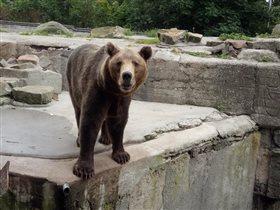 Блиц: зоопарк