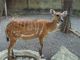 Зоопарк. Бали.Индонезия