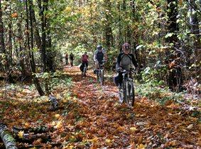 Как быстро набегает осень на яркий изумруд листвы!