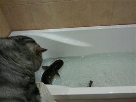 сом и кошка