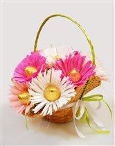 Конфетные хризантемы