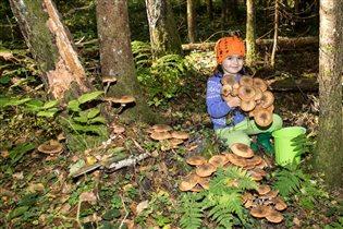 Осенняя пора - грибов очарование!
