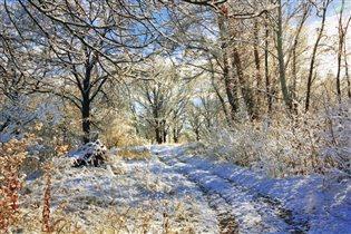 Волшебство первого снега.
