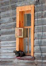 Дверка для кота