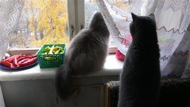 Осень...серость))