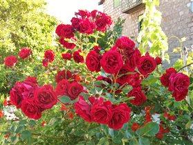 Любишь розы - терпи и шипы