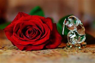 Роза и собачка
