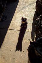 Большая тень маленького котёнка