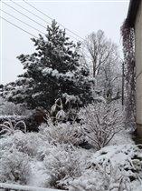 первый день зимы!  вид из окна!