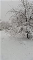 Зимняя снежность