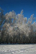 Лес преображается в зимнем одеянии