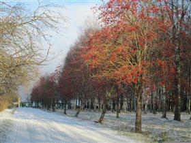 зима в славном