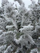 Ледяные оковы