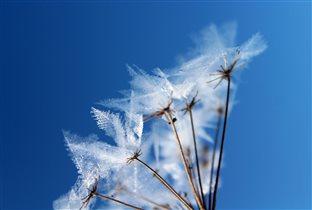 Ледяное соцветие
