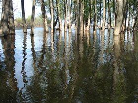 Тени на воде