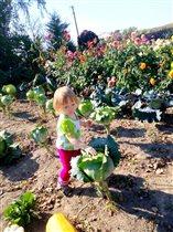 Пора собирать урожай!.. Олеся в деревне у бабушки)