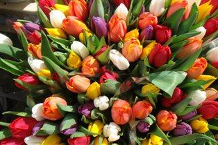 тюльпанчики первый запах весны