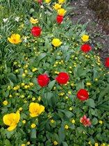 Весенние цветы... Парад тюльпанов.