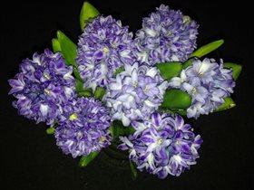 Гиацинты весенние
