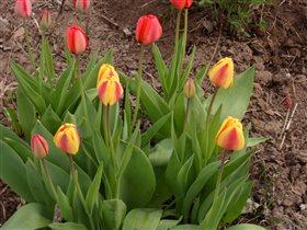 Первые цветы  в саду