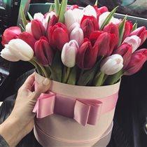 что может быть прекрасней ? только тюльпаны..