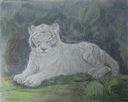 Кали. Белая тигрица Московского зоопарка