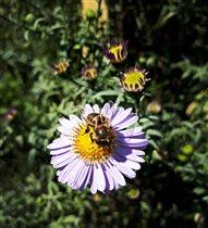 Приветик, от пчелки!