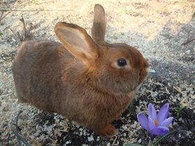 Весна идёт. Рад даже кролик)