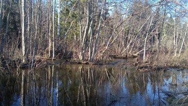 Лесные ручьи
