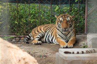 Поход в зоопарк в гости к Диким животным
