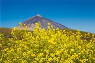 Тенерифе: 5 маршрутов для летнего отдыха