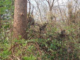 Дикие обезьяны в джунглях Тайланда