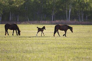 В лошадином семействе пополнение